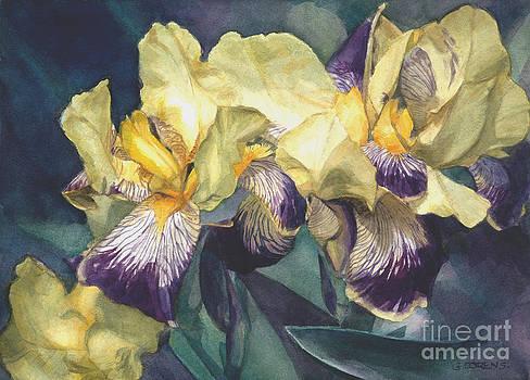 Yellow and purple streaked irises by Greta Corens