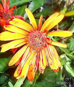 Floral Grunge by Paula Talbert