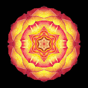 Yellow and Red Rose III Flower Mandala by David J Bookbinder