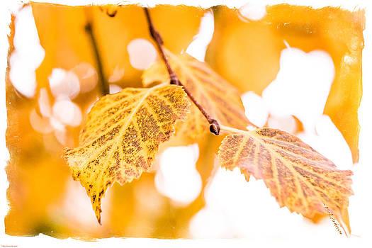 Mick Anderson - Yellow Autumn
