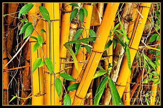 Yellow Bamboo by Hans R Hemken