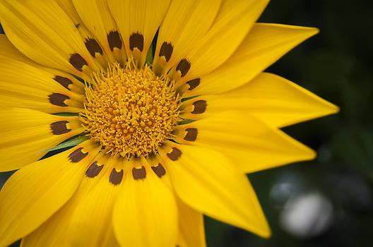 Yellow Beauty by Chad Davis