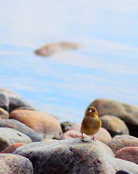 Yellow Bird by Nicholas Kjellner