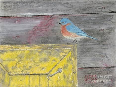 Yellow Box Bluebird by Jymme Golden