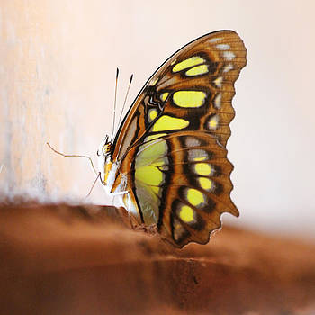 Yellow Butterfly by Nathan Miller
