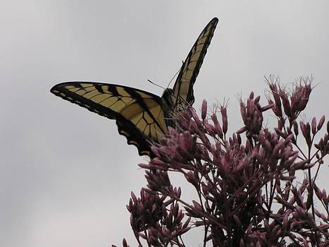 Shane Brumfield - Yellow Butterfly