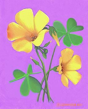 Yellow Clover Flowers by SophiaArt Gallery