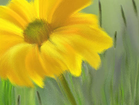 Nina Bradica - Yellow Daisy-2