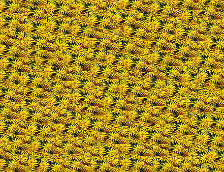 Yellow flower bed by Anders Hingel