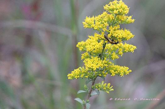 Yellow flower for yellow bug by Edward Hamilton