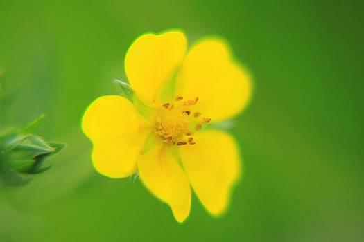 Yellow flower in green  by Daliya Photography