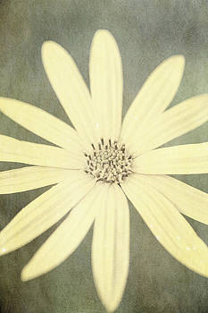 Yellow flower by Lars Hallstrom
