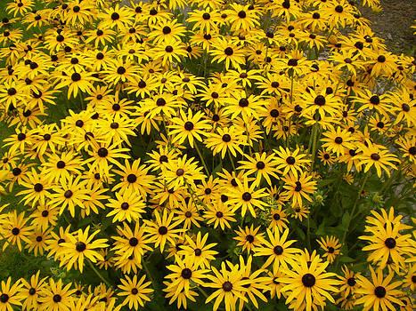 Yellow Flowers by Fabian Cardon