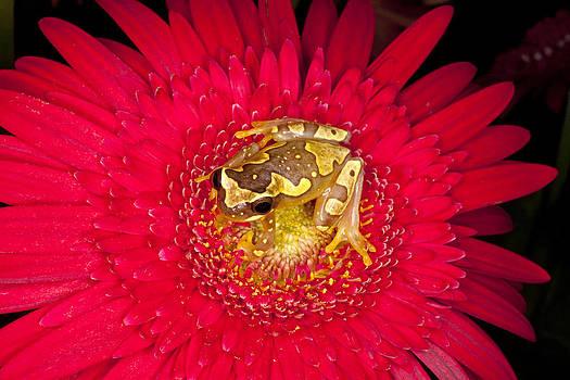 Yellow Frog by Indiana Zuckerman