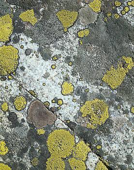 Yellow-gray stone by Efim Chernov