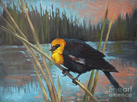 Yellow Headed Black Bird by Rob Corsetti