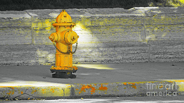 Yellow Hydrant by Michelle Hastings