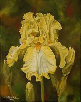 Yellow Iris  by Cynthia Snider