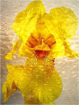 Joyce Dickens - Yellow Iris Metalica