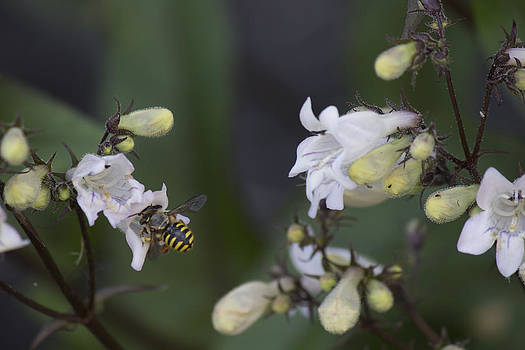 Yellow Jacket with Flowers 1 by Alfredia Mealing