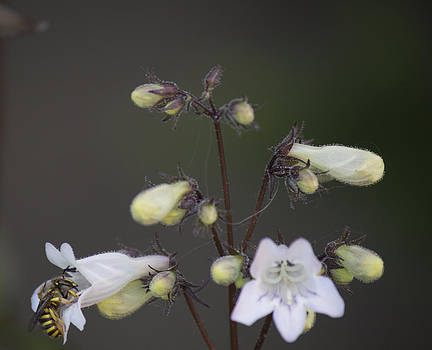 Yellow Jacket with Flowers 2 by Alfredia Mealing