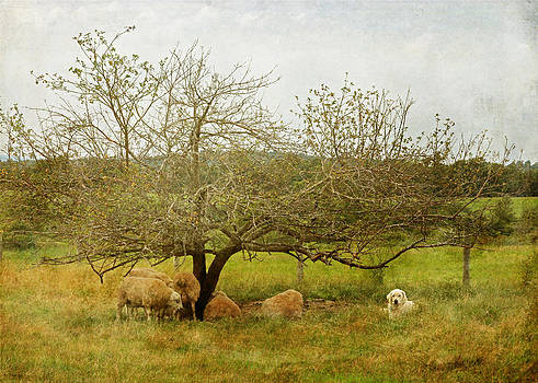 Yellow Lab and Sheep Under Apple Trees by Brooke Ryan