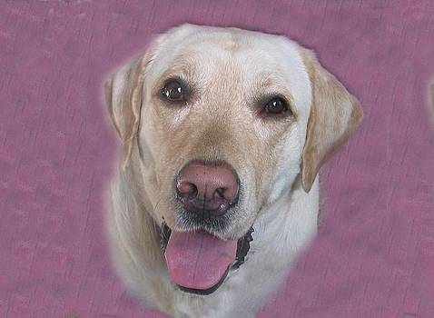 Yellow Lab by Pat Mchale