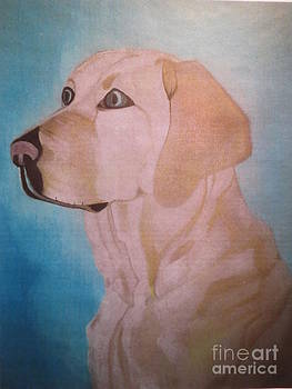 Yellow Lab by Sandra Spincola