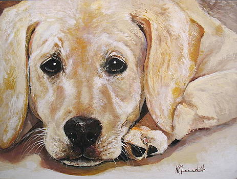 Yellow Labrador by Kevin Meredith