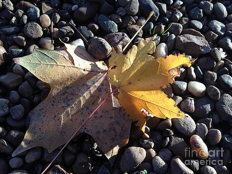 Yellow Leaves by Paula Talbert