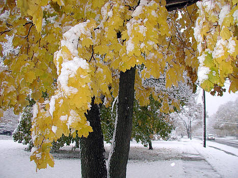 Yellow Leaves Snow storm by Ken Branch
