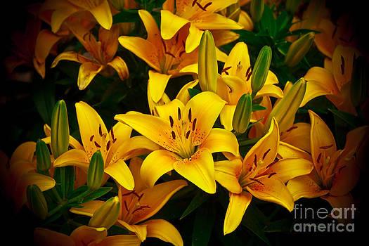 Joann Copeland-Paul - Yellow Lilies