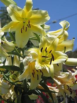 Alfred Ng - yellow lilies of the season