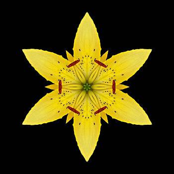 Yellow Lily I Flower Mandala by David J Bookbinder