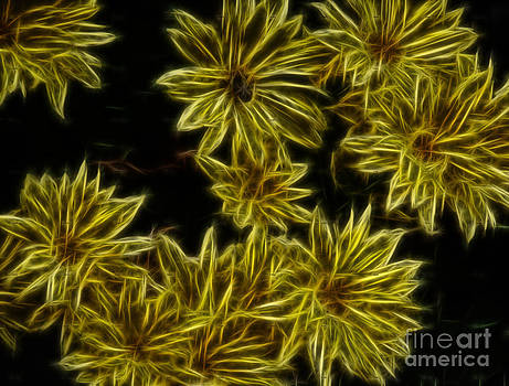 Yellow Mums by Amanda Collins