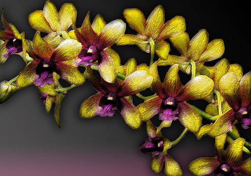 Cindy Boyd - Yellow Orchids