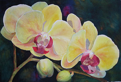 Yellow Orchids by Judy Mercer