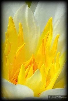 Yellow Petals by Terri K Designs