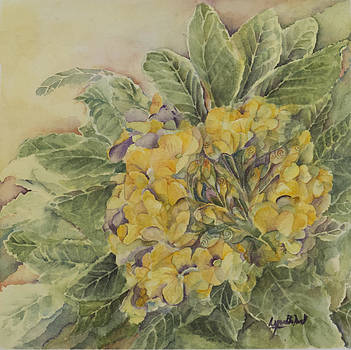 Yellow Primrose by Lynne Bolwell