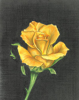 Yellow Rose by Troy Levesque