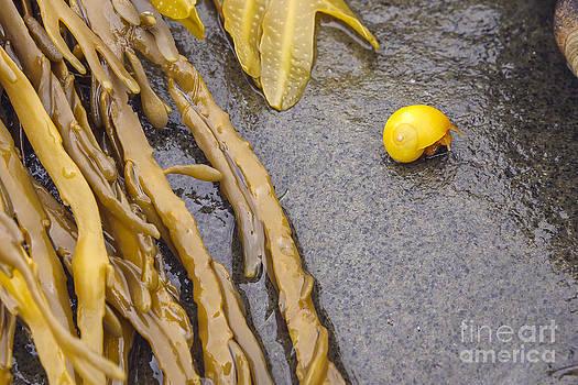 Yellow Snail by Scott Kerrigan