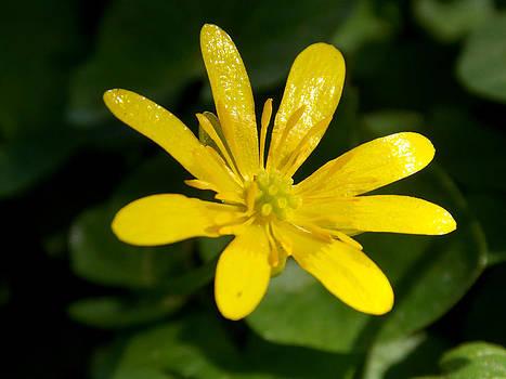 Yellow splash by Chris Cox