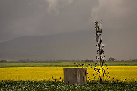 Yellow storm by Gordon  Grimwade
