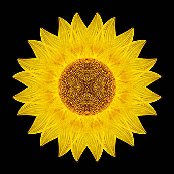 Yellow Sunflower IX Flower Mandala by David J Bookbinder