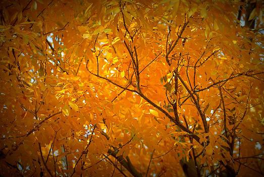 Yellow Tree by Kasie Morgan