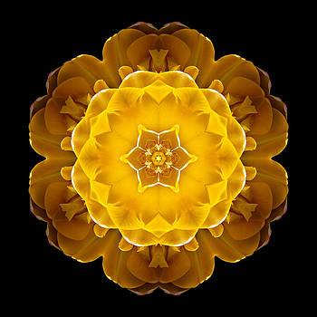Yellow Tulip II Flower Mandala by David J Bookbinder