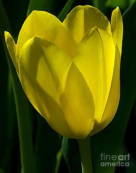 Yellow Tulip by Robert  Suggs