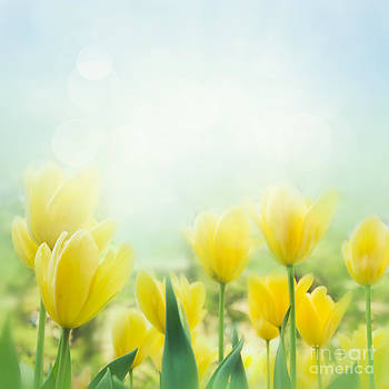 Mythja  Photography - Yellow tulips