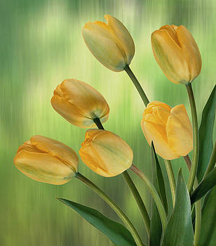 Nina Bradica - Yellow Tulips