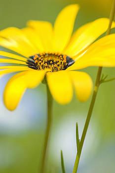 Yellow wildflower by Bill LITTELL